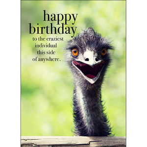 M28 - Happy Birthday - Animal greeting card