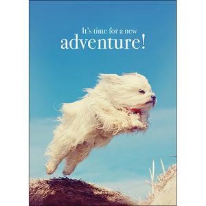 M64 - Adventure - Animal greeting card