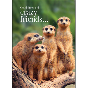 M88 - Good times and crazy friends - Animal greeting card
