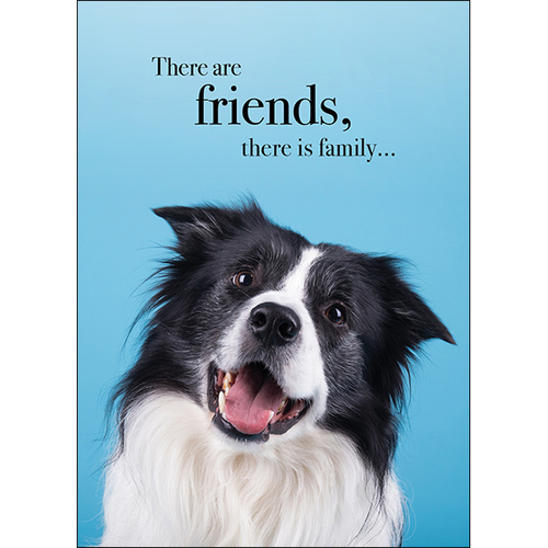 M104 - There are friends, there is family - Animal greeting card