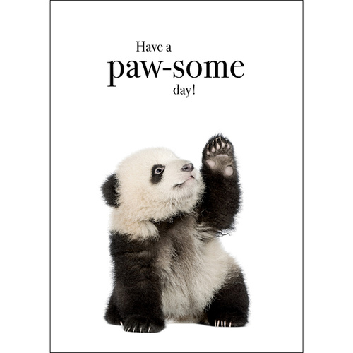 M30 - Have a paw-some day!